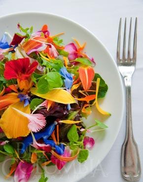 Sooke salad